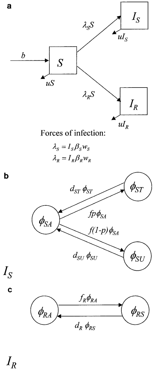 small resolution of structure of a basic compartmental model of hsv 1 transmission a