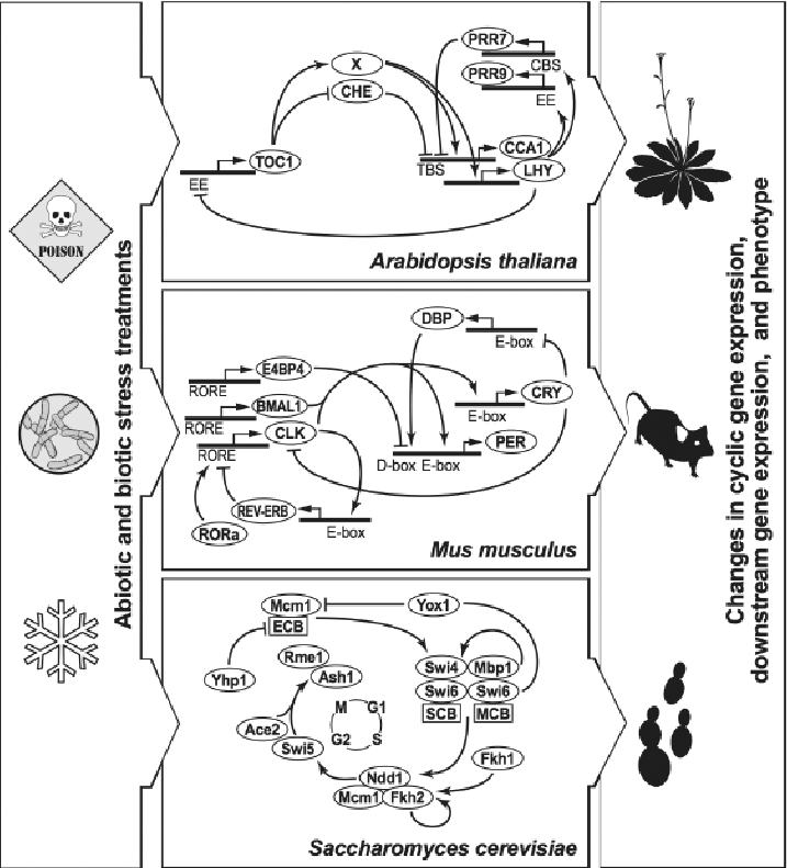 Detailed structures of the clock mechanisms for Mus