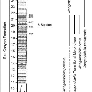 (PDF) Three Jinogondolella apparatuses from a single bed