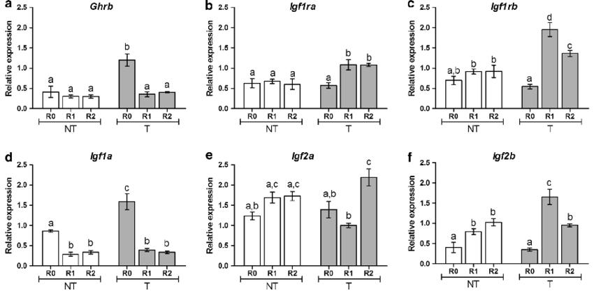 Relative gene expression of ghrb (a), igfr1a (b), igfr1b