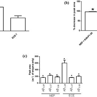 Effect of K49-P1-20 mediated enzyme activation on the