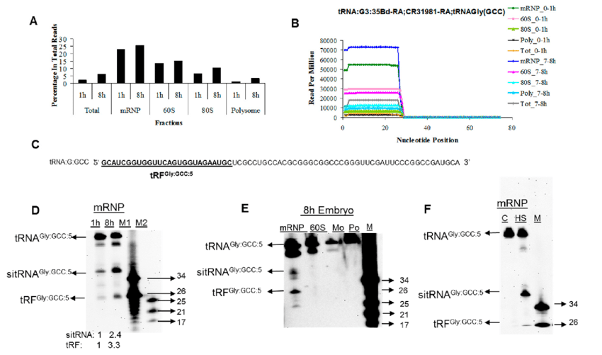 tRNA-derived fragments are associated with mRNP and 60S
