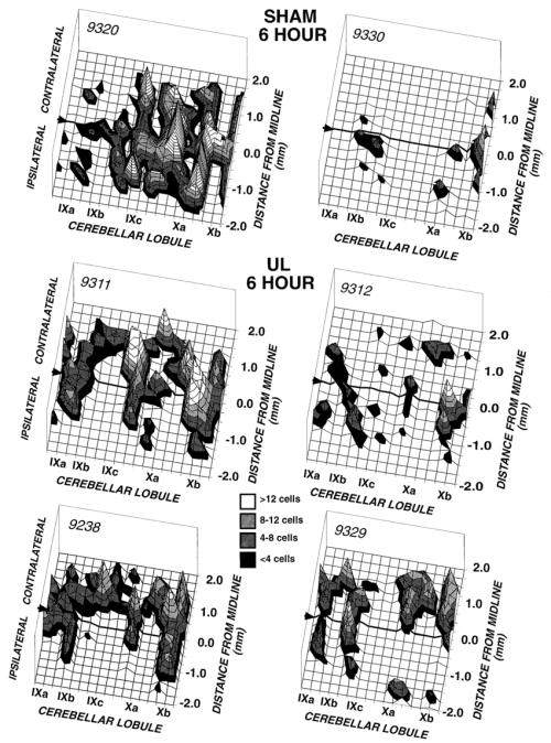 small resolution of density histograms of pkc immunoreactive purkinje cells across the rat download scientific diagram