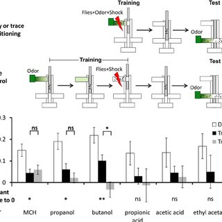 (PDF) Olfactory Trace Conditioning in Drosophila