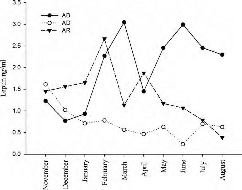 Seasonal concentrations of leptin in 3 captive moose fed a