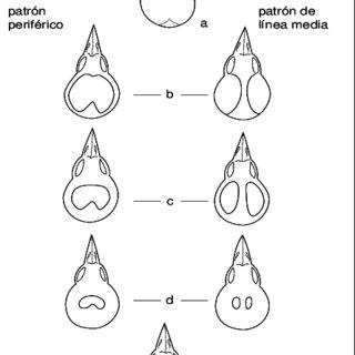 (PDF) Manual de Métodos de Campo para el Monitoreo de Aves