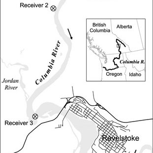 (PDF) Behaviour and physiology of mountain whitefish