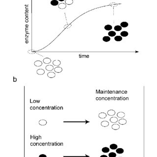 (PDF) Modeling network dynamics: The lac operon, a case study