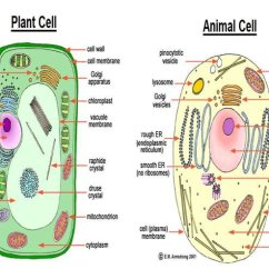 Plant Cell Diagram With Labels Fsk Modulation And Demodulation Block Structure Of Animal Download Scientific