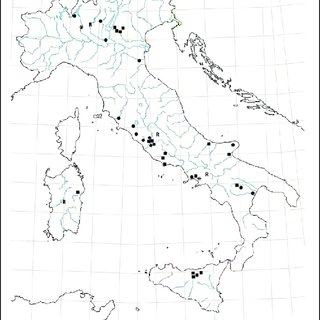 (PDF) The genus Lichenophanes Lesne, 1899 in Italy