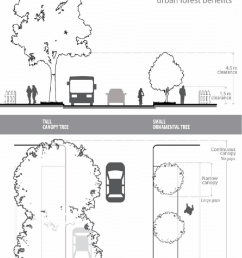 given the room to grow large canopy trees create a comfortable pedestrian space maintain [ 850 x 1054 Pixel ]