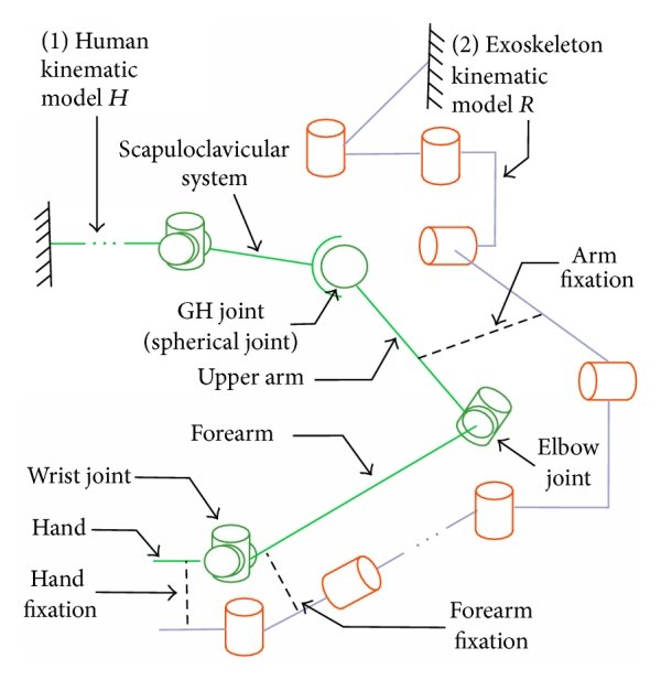 medium resolution of  a schematic diagram of the human and exoskeleton kinematic models and their interaction