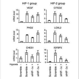 HIF-1a and HIF-2a inactivation by siRNA. A, quantitative