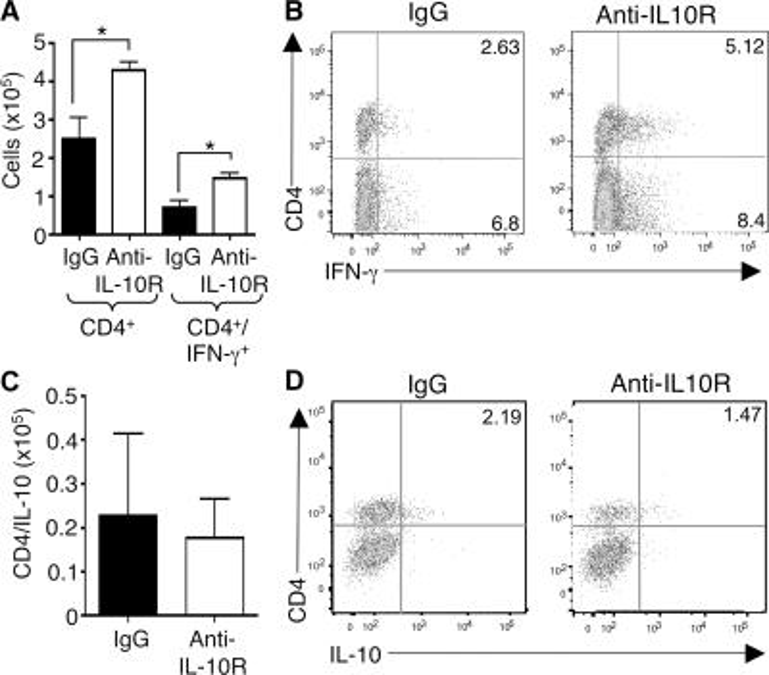 IL-10R blockade augments accumulation of IFN-γ– producing