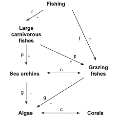 Coral Reef Food Chain Diagram Vectra C Abs Wiring Of A System Similar To That Proposed For Caribbean Localities Such As The