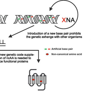 (PDF) Xenomicrobiology: A roadmap for genetic code engineering