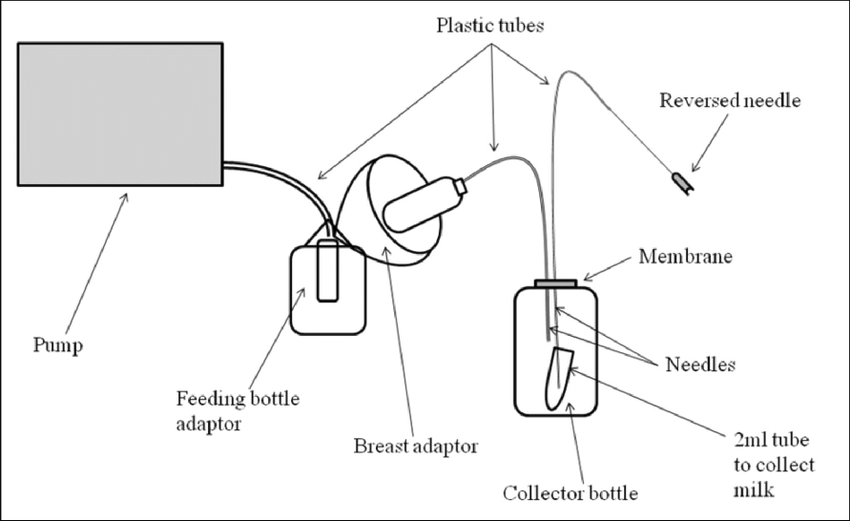 Milking machine diagram. The different parts are out of
