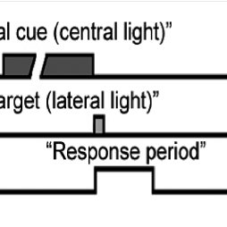Schematic representation of the temporal sequence of the