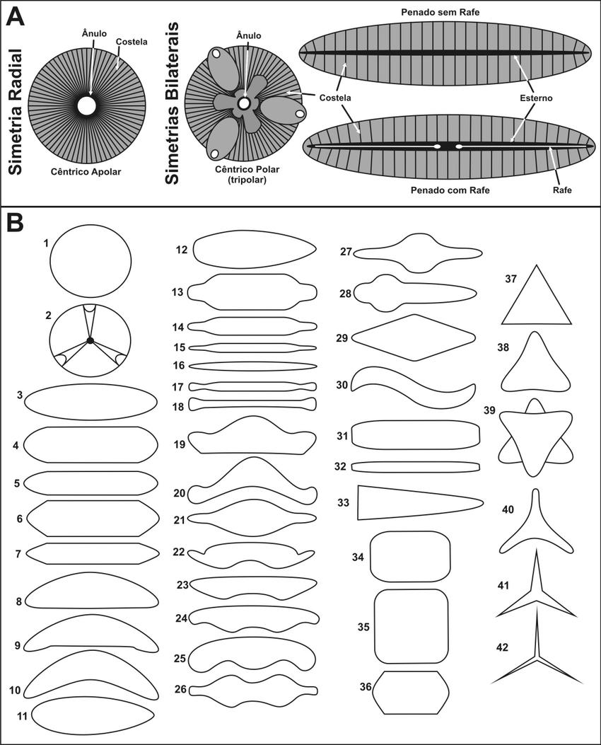 Diatomáceas (PDF Download Available)