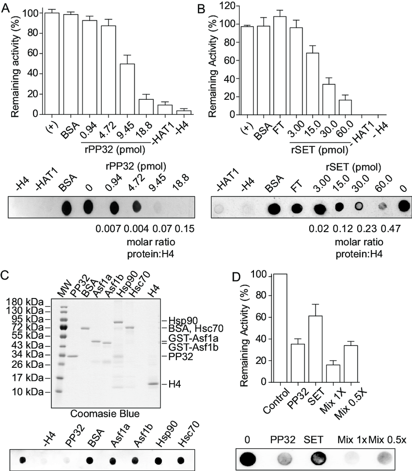 medium resolution of pp32 and set taf i proteins block hat1 mediated h4 acetylation in download scientific diagram