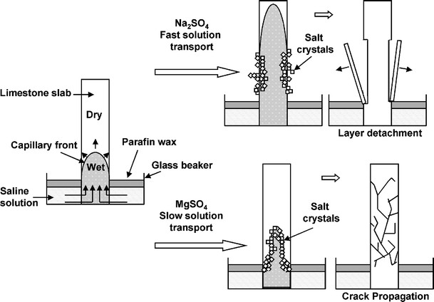 The role of saline solution properties on porous limestone