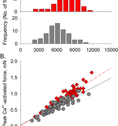 relationship between fiber cross sectional area csa and force a histogram [ 850 x 1203 Pixel ]