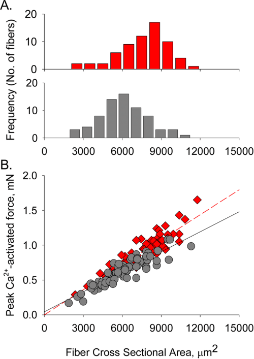 small resolution of relationship between fiber cross sectional area csa and force a histogram