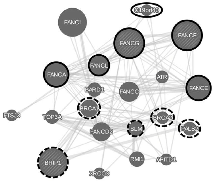physical interaction network. FANCF, FANCG and 5 other