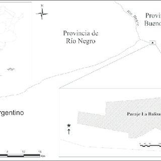 Coscinodiscus radiatus from Buenos Aires coastal waters