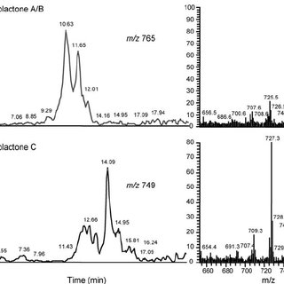 Pharmacokinetics of mycolactone in vivo. Panel A shows the
