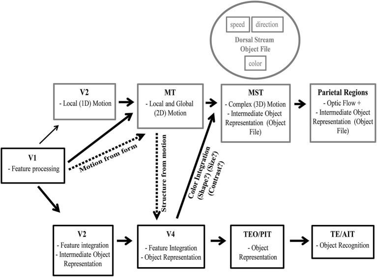 Intermediate object representation model. Visual