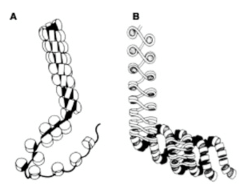 Two proposed models of the 30 nm Chromatin Fiber. A. In
