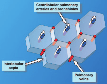 Diagram Illustrates The Three Main Compartments Of The