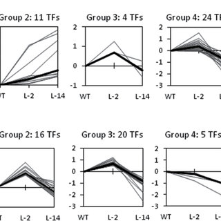 Parthenocarpic fruit development in P35S:SlPIN4 RNAi
