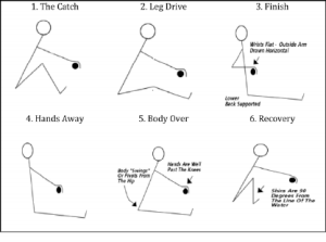 The different phases of the rowing stroke | Download