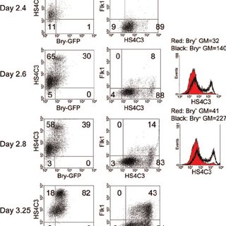 Heparan sulfate (HS)-specific antibodies reveal changes in