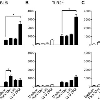 A) The early release of IFN-γ induces an increase of TLR9