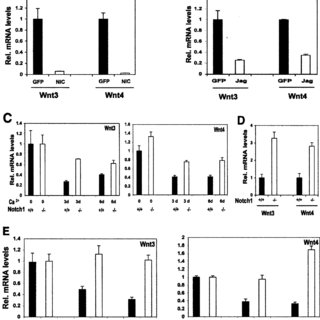 (PDF) p21WAF1/Cip1 is a negative transcriptional regulator