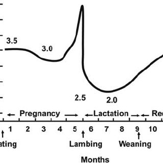 (PDF) Invited review: Improving neonatal survival in small