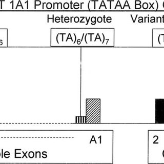 (PDF) Bilirubin and the Genome: The Hereditary Basis of Unconjugated Neonatal Hyperbilirubinemia