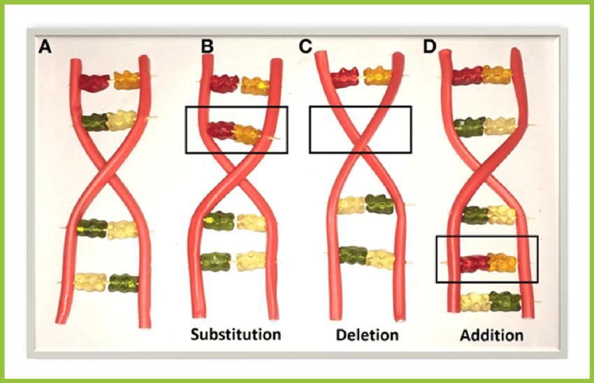 dna mutations using gummy