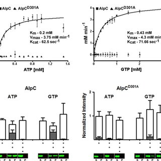 (PDF) A prophage-encoded actin-like protein required for