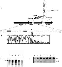 a schematic representation of the genetic organization of the salb chromosomal region large [ 850 x 937 Pixel ]