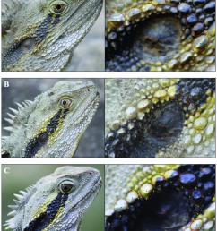 photo identification of lizards figure demonstrates how i3s spot download scientific diagram [ 850 x 1011 Pixel ]