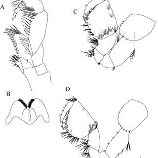 (PDF) Making future taxonomy of Niphargus (Crustacea
