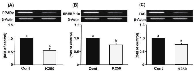 PPARγ, SREBP-1c, and FAS mRNA expressions in 3T3-L1