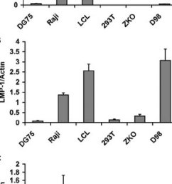 fig 2 bic rna levels are highest in ebv positive lcl cells  [ 850 x 1635 Pixel ]