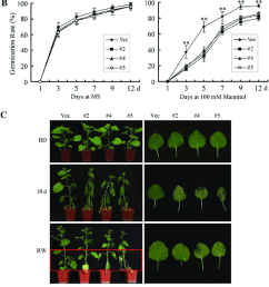 reduced drought tolerance in ghmkk5 overexpressing plants a seed germination on ms [ 850 x 1517 Pixel ]