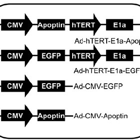(PDF) Potent growth-inhibitory effect of a dual cancer