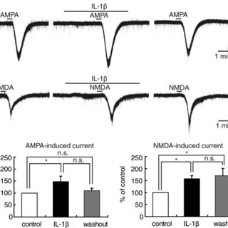 Tetrodotoxin (TTX) reduced the AMPA- but not NMDA-induced